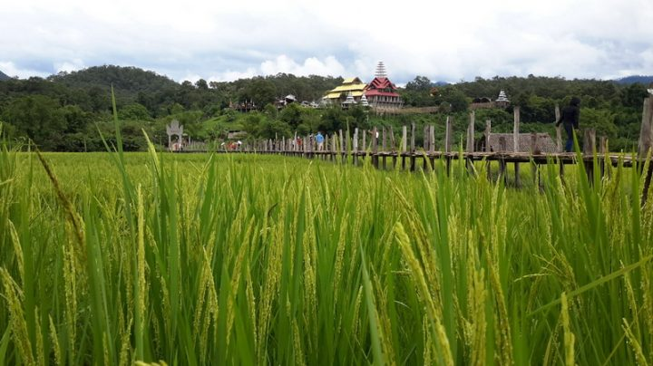 su tong pae rice field