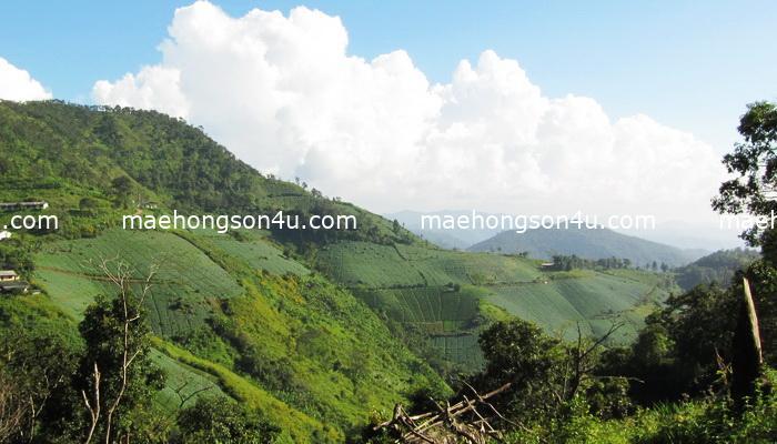 trek with preecha
