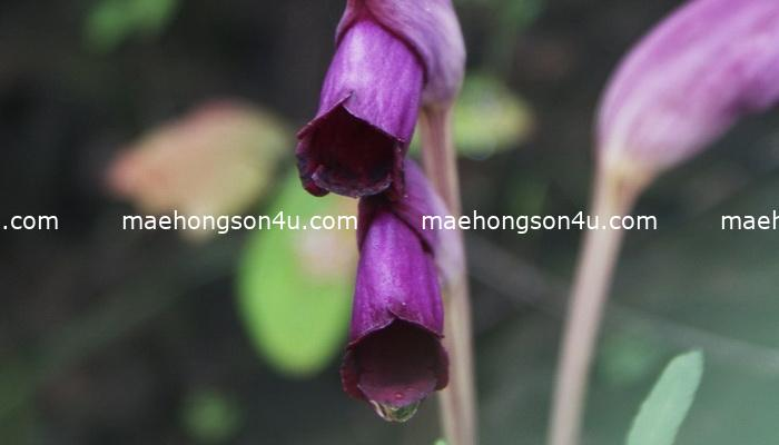 wild flower on the ground